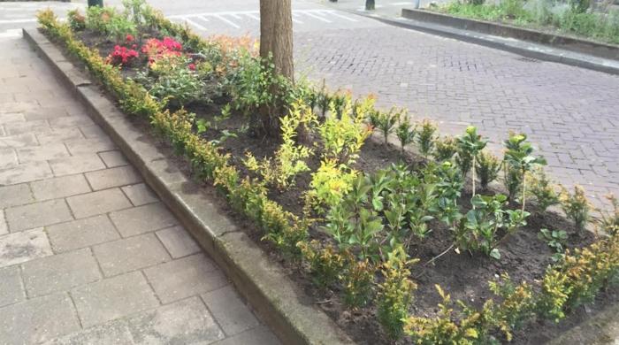 Aanvraag vergoeding plantjes in de Noremborghstraat